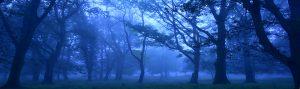 Badbury Rings, Dorset in the mist